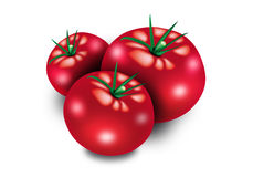 Red tomato. Hand illustration of a red tomato Royalty Free Stock Images