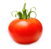Red tomato isolated royalty free stock photo