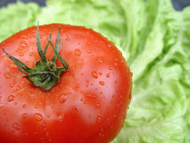 Red tomato on lettuce leaf. Healthy food: red tomato is in a leaf of lettuce, coarsely Stock Photos