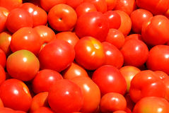RED TOMATO Royalty Free Stock Photos