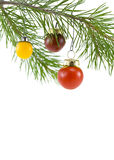 Red Tomato Ornament Royalty Free Stock Photo