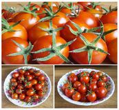 Red tomato in plate. Beautiful background from red and bright tomato with green sheet Stock Images