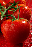 Red tomato on red Stock Image