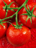 Red tomato on red Royalty Free Stock Photos