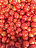 Red Tomato's royalty free stock image