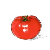 Red tomato sketch draw isolated over white Royalty Free Stock Image