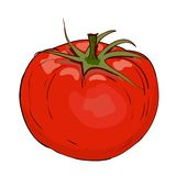 Red tomato in vector Royalty Free Stock Image
