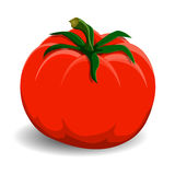 Red tomato on white background Stock Photos