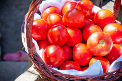 Red tomato in a wicker basket. Fresh red tomatoes in greenhouse Royalty Free Stock Photo