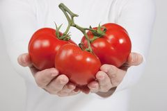 Red tomato in woman hands. Woman holding green apple in her hands. isolated on white background Royalty Free Stock Photography