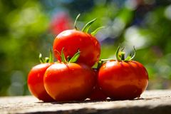 Red tomatoes. On a wooden table stock photography