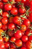 Red tomatoes Royalty Free Stock Image