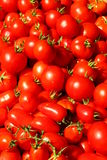Red tomatoes. Lots of bright juicy red tomatoes closeup Stock Photos