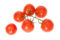 Red tomatoes. Stock Image