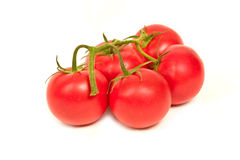 Red tomatoes. On the vine Royalty Free Stock Photography