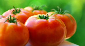 Red Tomatoes. Royalty Free Stock Photography