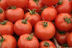 Red tomatoes. Lots of red tomatoes Royalty Free Stock Image