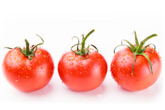 Red tomatoes against a background. Three juicy red tomatoes in a row with water droplets and green stems on a white background Royalty Free Stock Images