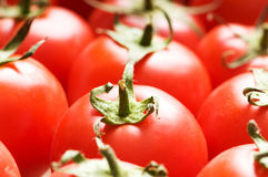 Red tomatoes arranged Stock Images