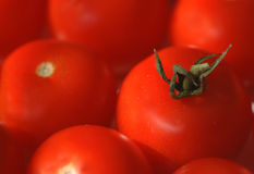 Red tomatoes background. Closeup soft shot of red tomatoes in natural lightning Royalty Free Stock Images