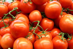 Red tomatoes background. Group of tomatoes Stock Images