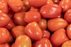 Red tomatoes background. Group of tomatoes for sale. On Florida market royalty free stock image