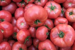 Red tomatoes background. Group of tomatoes. Turkey stock photos