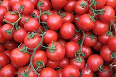 Red tomatoes background. Group of tomatoes. Turkey royalty free stock photo