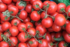 Red tomatoes background. Group of tomatoes. Turkey stock photo