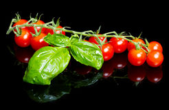 Red tomatoes with basil leaf on black. Some red tomatoes with basil leaf on black Royalty Free Stock Image