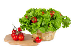 Red tomatoes in a basket with lettuce Royalty Free Stock Image