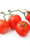 Red tomatoes on the branch Royalty Free Stock Image
