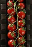 Red tomatoes branch Royalty Free Stock Images