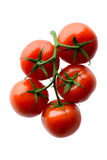 Red tomatoes on a branch Stock Photo