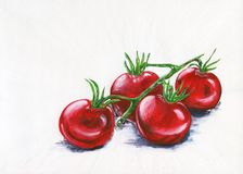 Red tomatoes on a branch. Hand-drawn illustration. Royalty Free Stock Photos