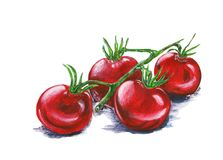 Red tomatoes on a branch. Hand-drawn illustration. Stock Images