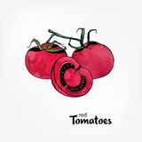 Red tomatoes on a branch. Whole and part in a cut. hand drawn illustration with watercolor texture. Stock Photos