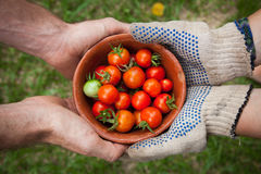 Red Tomatoes on Brown Bowl Stock Photography