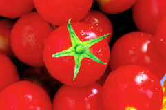 Red tomatoes cherry Stock Photography