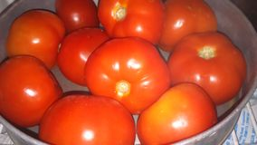 Red tomatoes. Tomatoes chilling in the refrigerator Stock Images