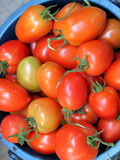 Red tomatoes closeup Royalty Free Stock Photos