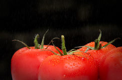Red tomatoes from field Stock Photos