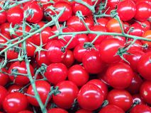 Red tomatoes. Fresh veggies, good for health,source of Stock Images