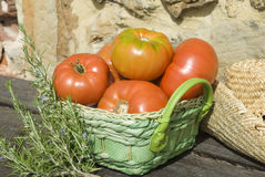 Red tomatoes from the garden Royalty Free Stock Photography