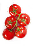 Red tomatoes on a green branch Royalty Free Stock Photography