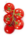 Red tomatoes on a green branch Stock Images