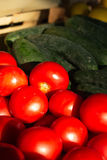 Red tomatoes  and green cucumbers Royalty Free Stock Images