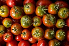 Red tomatoes with green cuttings and water droplets, top view Stock Photos