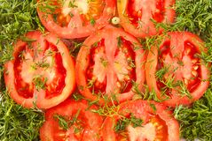Red tomatoes with green dill under. Green fennel on red tomatoes Royalty Free Stock Photography