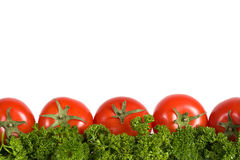 Red tomatoes on the green parseley. Isolated on white background with copy space Stock Images